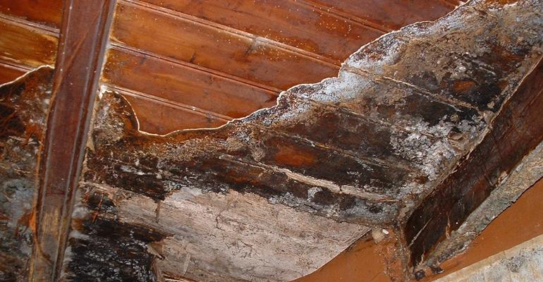 termites et merule